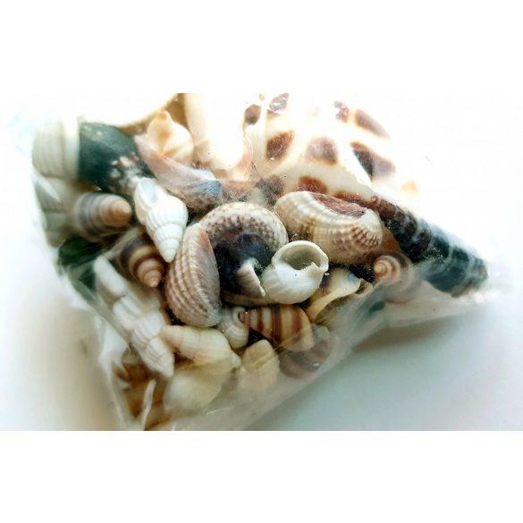 Dekor tengeri kagylócskák